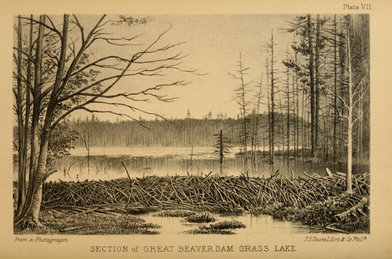 barrage de castor